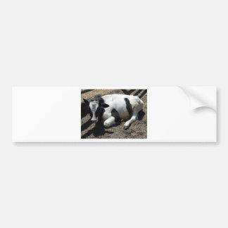 cow,baby car bumper sticker