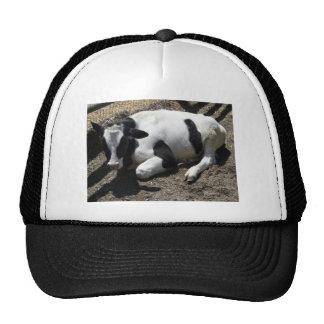 cow,baby trucker hat