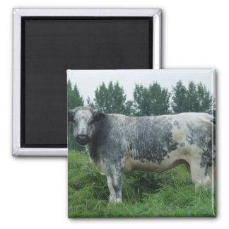 Cow Belgian Blue Magnet