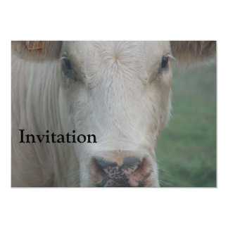 Cow Big Head Card