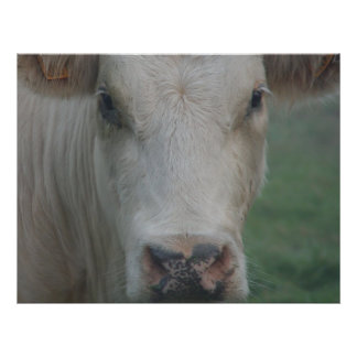 Cow Big Head Poster