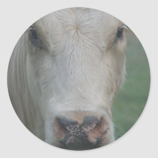 Cow Big Head Round Sticker