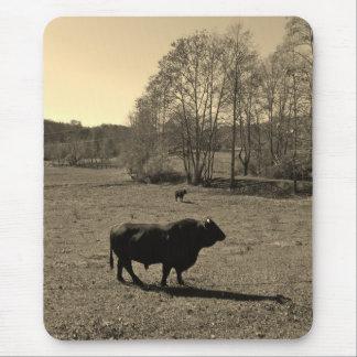 Cow, Black bull. Sepia Tone  Photo Mouse Pad