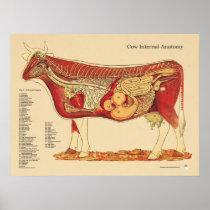 Cow Bovine Veterinary Internal Anatomy Chart