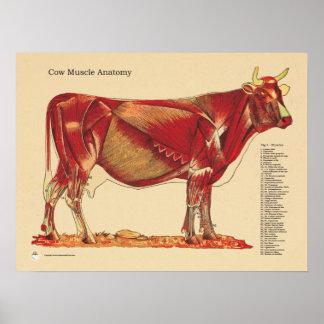 Cow Bovine Veterinary Muscles Anatomy Chart Poster