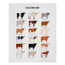 Cow breds poster