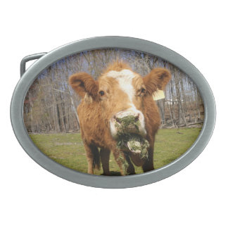 Cow Buckle Oval Belt Buckle