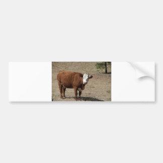 Cow bumper sticker