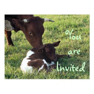 Cow & calf Postcard/invitation-customize Postcard