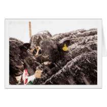 Cow catching Snowflakes on Tongue Holiday Card