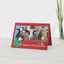 Cow Christmas Holiday Card