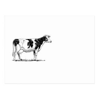 Cow Design Pencil Sketch Postcard