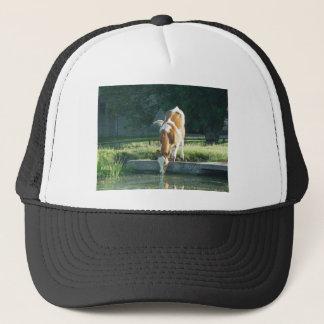 Cow drinking trucker hat