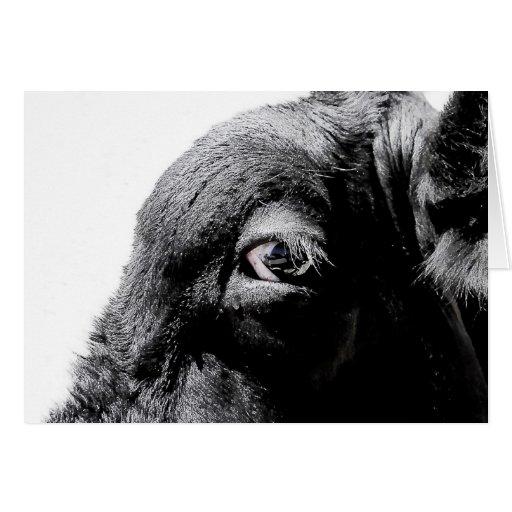 Cow Eye Card