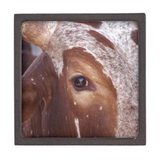 Cow Eye Gift Box