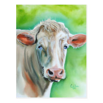 Cow face postcard