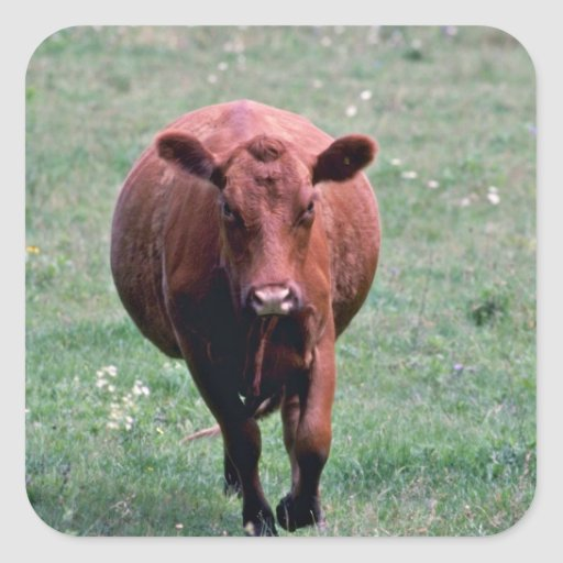 Cow flowers square sticker