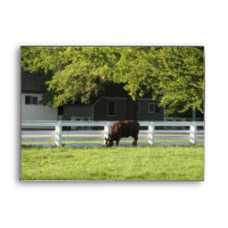 Cow Grazing Envelope