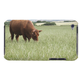 Cow grazing in meadow iPod touch case