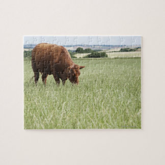 Cow grazing in meadow jigsaw puzzle