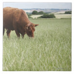 Cow grazing in meadow large square tile