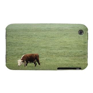 Cow grazing in meadow, Nova Scotia, Canada iPhone 3 Case-Mate Case