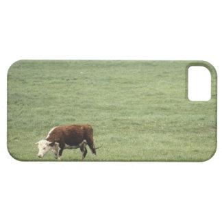 Cow grazing in meadow, Nova Scotia, Canada iPhone SE/5/5s Case