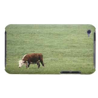 Cow grazing in meadow, Nova Scotia, Canada iPod Case-Mate Case