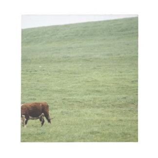 Cow grazing in meadow, Nova Scotia, Canada Note Pad