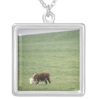 Cow grazing in meadow, Nova Scotia, Canada Silver Plated Necklace