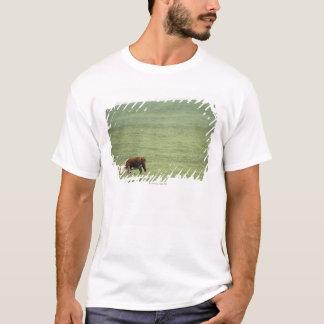 Cow grazing in meadow, Nova Scotia, Canada T-Shirt