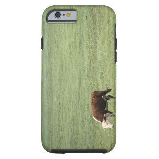 Cow grazing in meadow, Nova Scotia, Canada Tough iPhone 6 Case