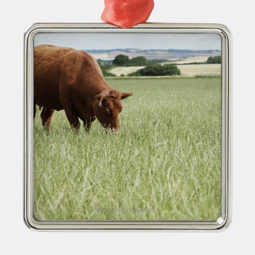Cow grazing in meadow square metal christmas ornament