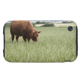 Cow grazing in meadow tough iPhone 3 case