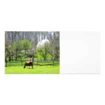 Cow Grazing in Pasture in Spring Rack Card