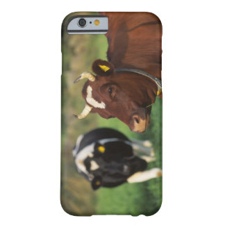 Cow grazing, Sweden. Barely There iPhone 6 Case