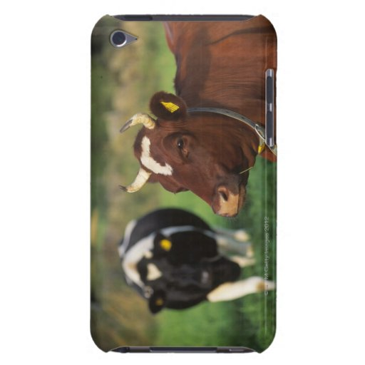 Cow grazing, Sweden. iPod Touch Cases