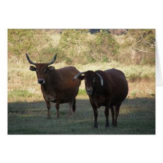 cow horns - get well card