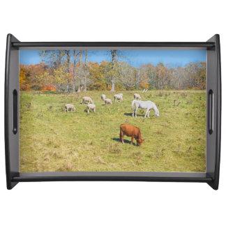 Cow Horse Sheep Grazing On Grass in Farm Field Serving Platter