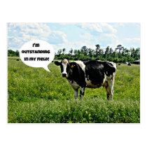 Cow Humor Postcard
