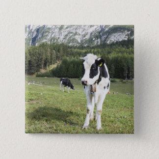 Cow In A Meadow, Fie Allo Sciliar, Alto Adige, Button