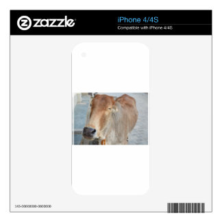 Cow In Bliss iPhone 4 Skins