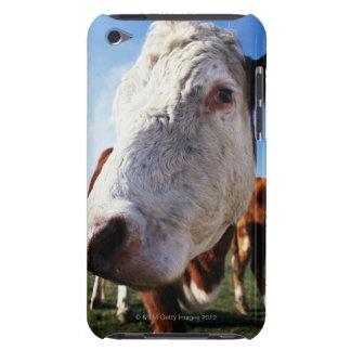 Cow in field, close-up iPod Case-Mate case