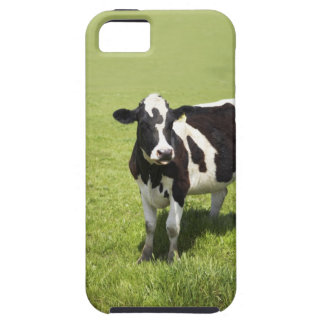 Cow in meadow iPhone SE/5/5s case