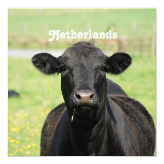 "Cow in Netherlands 5.25"" Square Invitation Card"