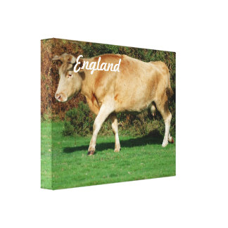 Cow in New Forest Canvas Print