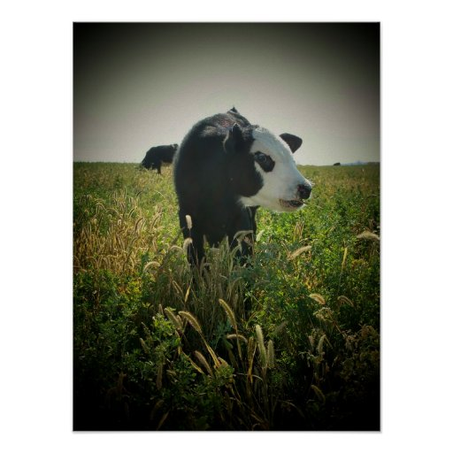 Cow in pasture poster