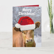 Cow in Santa Hat - Merry Christmas, Happy Moo Year Holiday Card