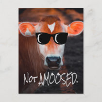 Cow in Sunglasses Not aMOOsed Cute Funny Postcard
