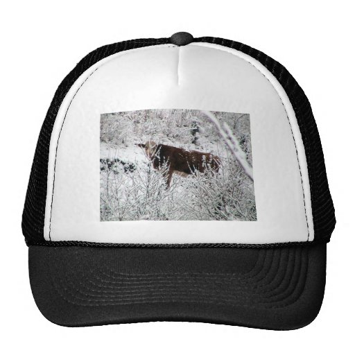 Cow In The Bushes Trucker Hat